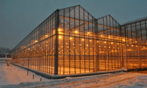 Greenhouse complex in Novgorod region